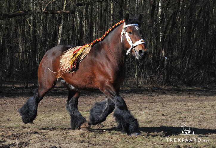Cheval De Trait Belge Branbancon Trekpaard Net
