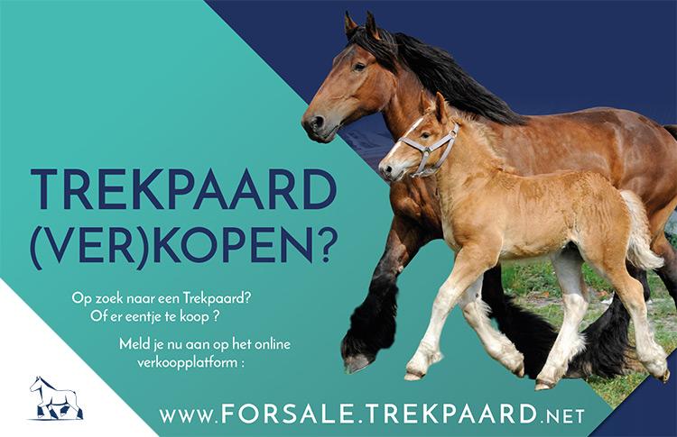 Belgisch Trekpaard kopen