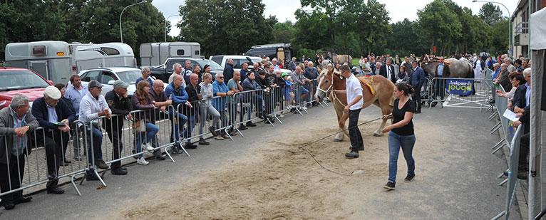 Veel volk op de eerste prijskamp van Trekpaard Jeugd in Schriek