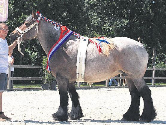 De vrouwelijke Fien van het Hokselaarhof werd dag- en erekampioene (© JANNIEHUMMELFOTOGRAFIE / De Paardenkrant)